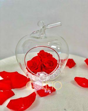 Long lasting Red Rose